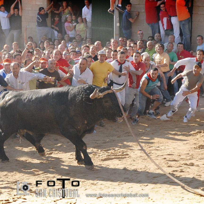 06-06-07 Toro Enmaromado-N3473