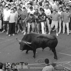 """*ZAMORA* 09-JUNIO-2.004 EL MUNDO DE CASTILLA Y LEON. """"VALLADOLID"""". *TEMA: TORO ENMAROMADO DE BENAVENTE. """"TORO LUCIDO"""". *FOTO: 2ª de 3. *A/A: REGION (LOLA). *FOTOGRAFIA: JOSE FRANCISCO GAMAZO"""
