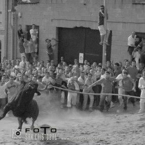 14-06-06 Toro enmaromado-2006-N2820